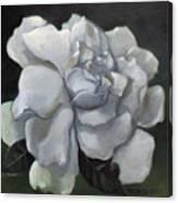 Gardenia Two Canvas Print