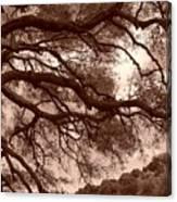 Garin Park Tree 2 Canvas Print