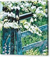 Gate And Blossom Canvas Print