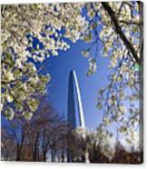 Gateway Arch With Cherry Tree In Bloom. Canvas Print
