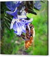 Gathering Rosemary Pollen Canvas Print
