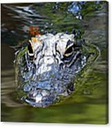 Gator And Dragonfly Canvas Print