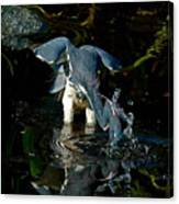 Gator And The Blue Canvas Print