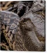 Gator Eye Canvas Print