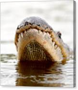 Gator Grin Canvas Print