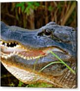 Gator Head Canvas Print