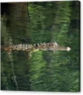 Gator In The Spring Canvas Print