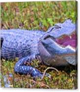 Gator Laugh Canvas Print