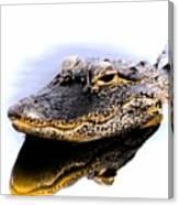 Gator Profile Reflection Canvas Print
