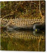 Gator Relection Canvas Print