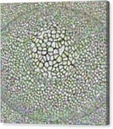 Gauzean 2a Canvas Print