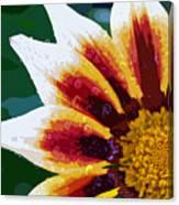 Gazania Flower Design Canvas Print