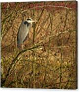 Gbh In A Tree Canvas Print