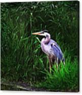 Gbh In The Grass Canvas Print