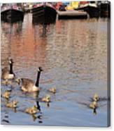 Gees And Goslings 2 Canvas Print