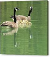 Geese And Babies Canvas Print