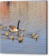 Geese And Goslings 3 Canvas Print