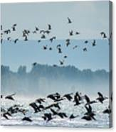 Geese And Gulls Canvas Print
