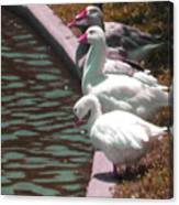 Geese At Guth Park Canvas Print