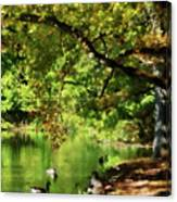 Geese By Pond In Autumn Canvas Print
