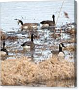 Geese Hangout Canvas Print