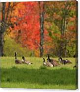 Geese In Autumn Canvas Print