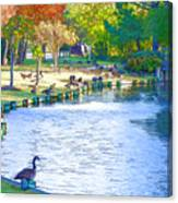 Geese In Pond 3 Canvas Print