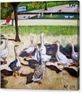 Geese In The Park Canvas Print