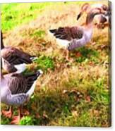 Geese In The Yard Canvas Print
