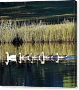 Geese Mother And Young Canvas Print