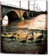 Geese On A Stroll Canvas Print
