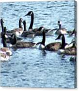 Geese On Lake Nockamixon Canvas Print