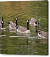 Geese On Pond Canvas Print