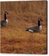 Geese On The Salt Marsh  Canvas Print