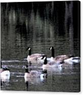 Geese On The Water Canvas Print