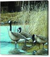 Geese On Watch Canvas Print