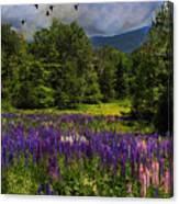 Geese Over Lupine Field Canvas Print