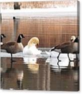 Geese Swans And Ducks Canvas Print