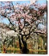 Geese Under Flowering Tree Canvas Print