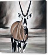 Gemsbok - Solitude Canvas Print