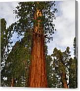 General Sherman Tree Canvas Print