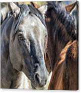 Gentle Face Of A Wild Horse Canvas Print