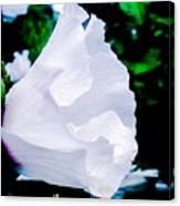 Gentle Floral Canvas Print