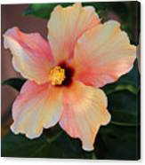 Gentle Hibiscus Canvas Print