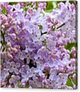 Gentle Purples Canvas Print