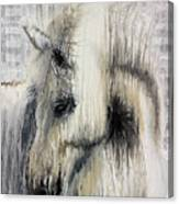 Gentle White Horse Canvas Print