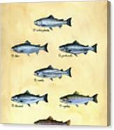 Genus Oncorhynchus Canvas Print