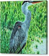 George - The Blue Heron Canvas Print