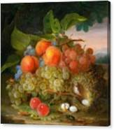 George Forster  Still Life With Fruit And A Birds Nest Canvas Print