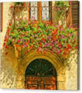 Gerani Coloriti Canvas Print